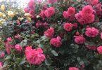 Foto mit Blumen