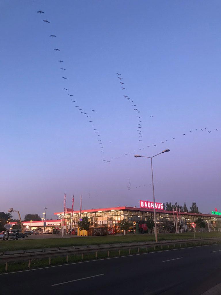 Foto von Zugvögeln über Rostock