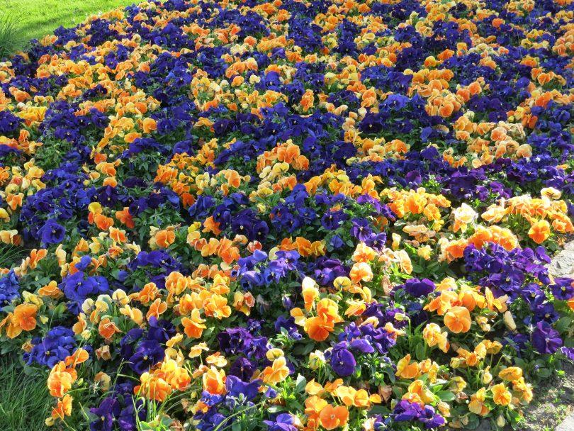Blumen (Symbolfoto)